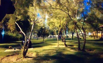 arbre et pique-nique dans parc public la nuit